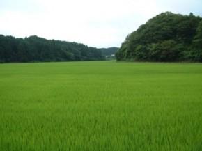 旧大洋村の水田(2)